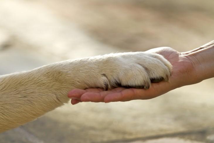 Psy, koty i inni lekarze